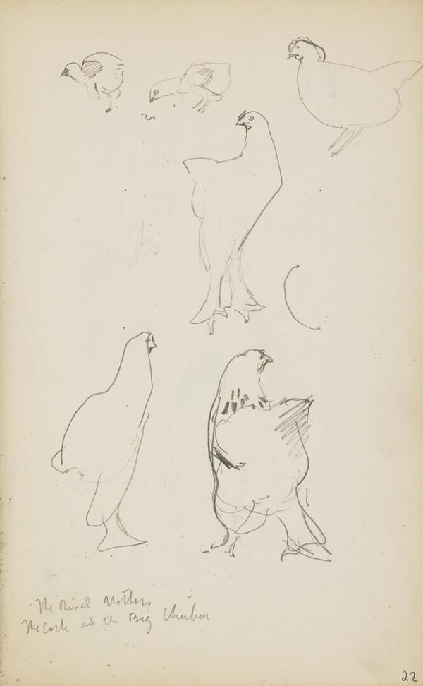 Sketches of Chickens (Verso: Two Sketches of a Rooster) (About 1890s)