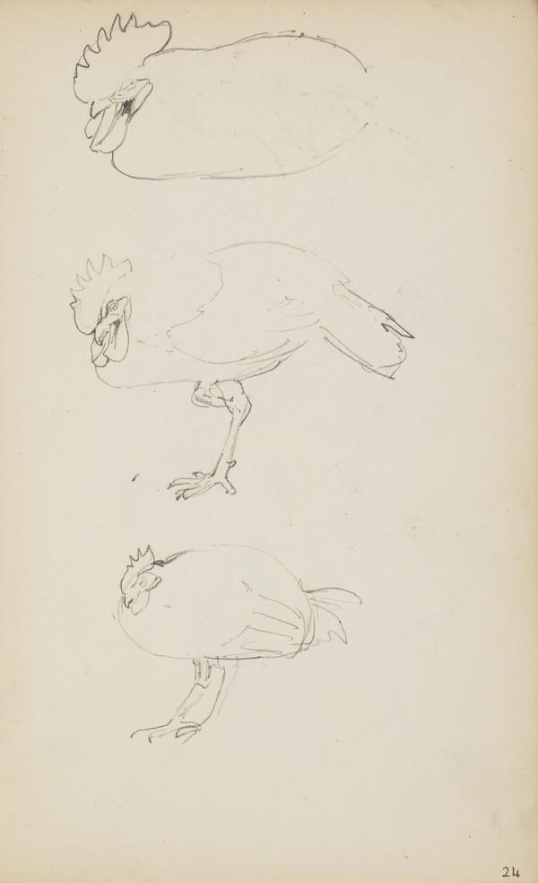 Three Sketches of a Rooster (Verso: Sketches of Chickens) (About 1890s)