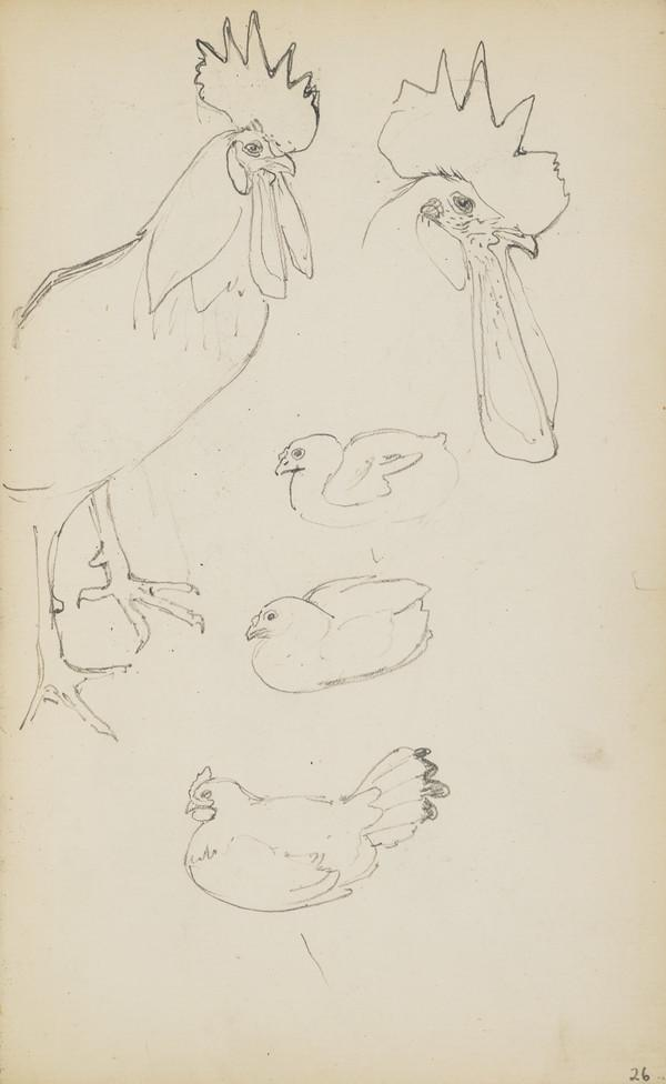 Two sketches of a Rooster and Others of Nesting Hens (Verso: Sketches of Chickens) (About 1890s)
