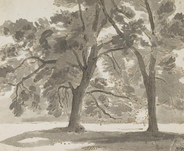 Ash Trees in Parkland (Dated 1805)