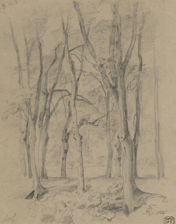 Ash Trees (Dated 1805)