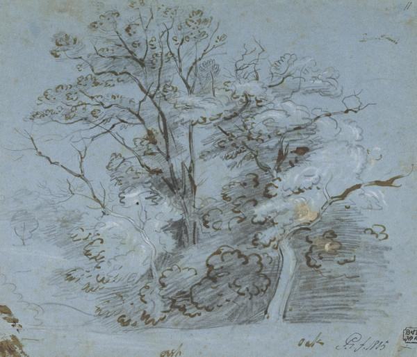 Ash and Oak Trees (Dated 1805)