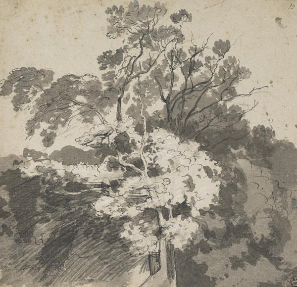 A Chestnut Tree (Dated 1805)