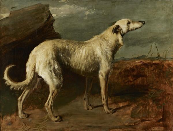 Braan, a Celebrated Scottish Deerhound (before 1842)