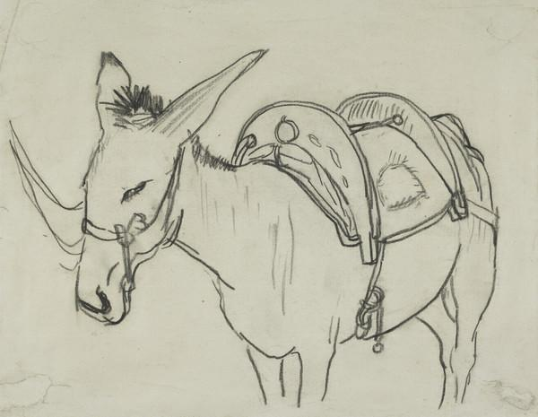 Front View of a Saddled Donkey