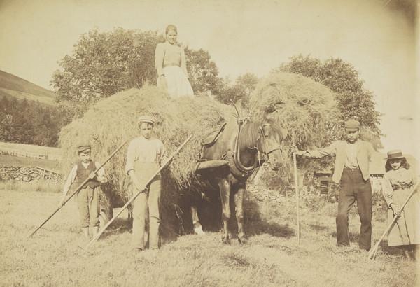 Leading Hay