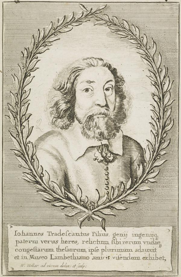 Johannes Tradescantius