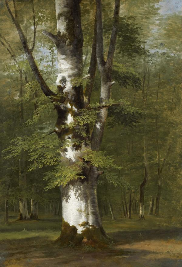 A Study of a Tree (About 1816 - 1822)