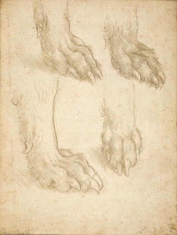 Studies of a Dog's Paw