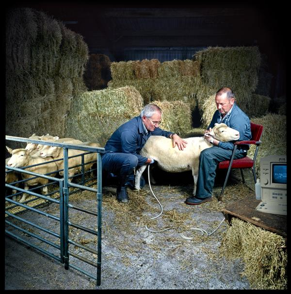 Anaesthetist John Bracken and Farm Research Assistant Douglas McGavin at The Roslin Institute (2002)