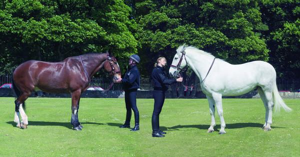 Mounted Section, Lothian and Borders Police O Division (2006)