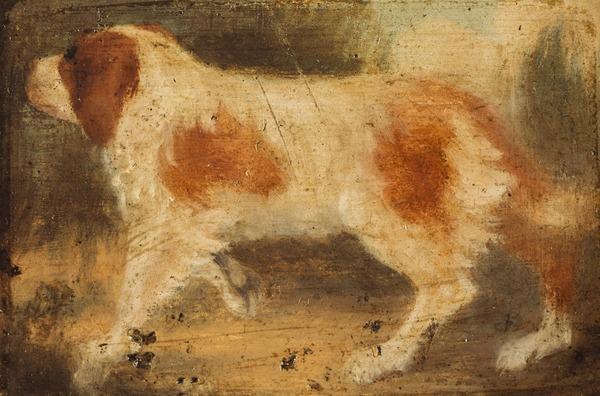 A Dog Facing Left