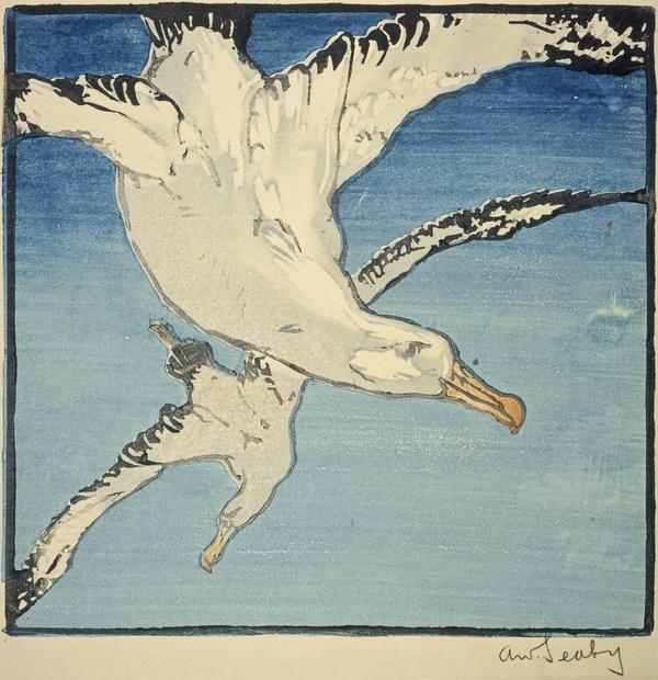 Albatrosses (by 1908)
