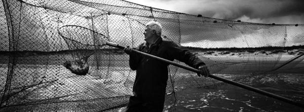 Bob Ritchie removing a fish through the pocket of a jumper net at the Watermouth station, Kinnaber, Angus. The nets are fished twice a day, on... (2000)
