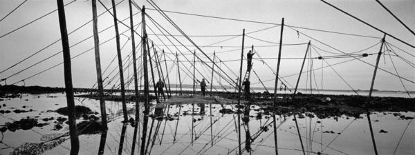 Constructing the fly net at Boddin Point, Angus. This is the last fly net still in operation on the east coast and was the only one ever built on... (2000)