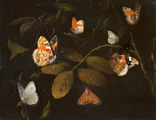 Six Butterflies and a Moth on a Rose Branch (About 1690)