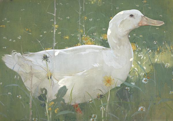 The White Drake (About 1895)