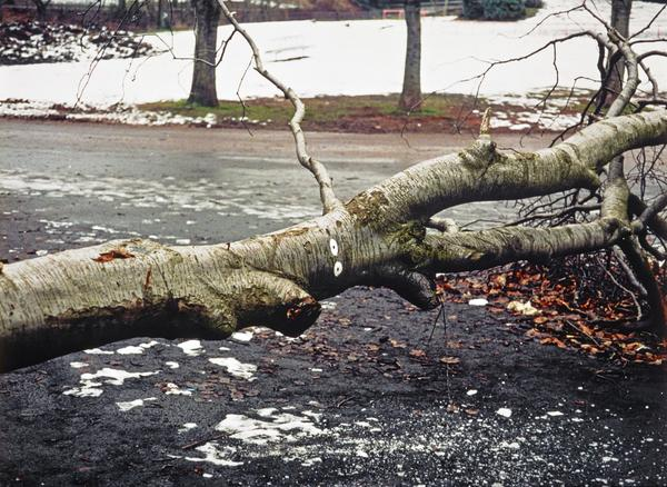 Fallen Tree with Eyes (1996)