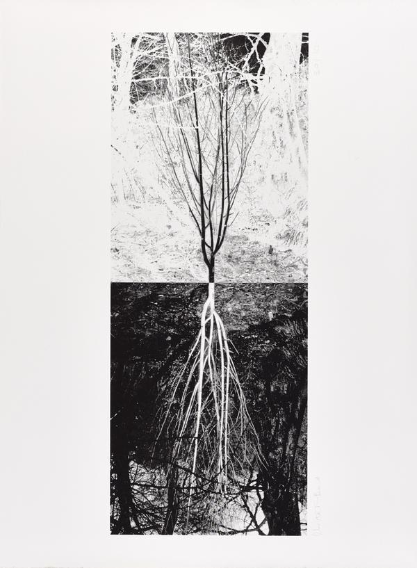 Untitled (2006)