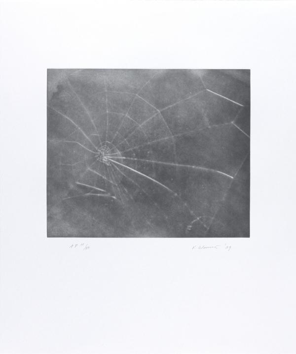 Web #5 (2009)