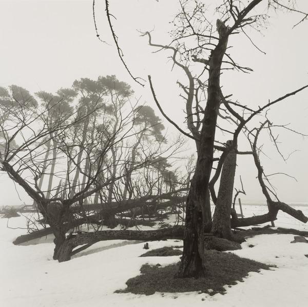 Fallen Trees, Moorfoot Hills (1987)