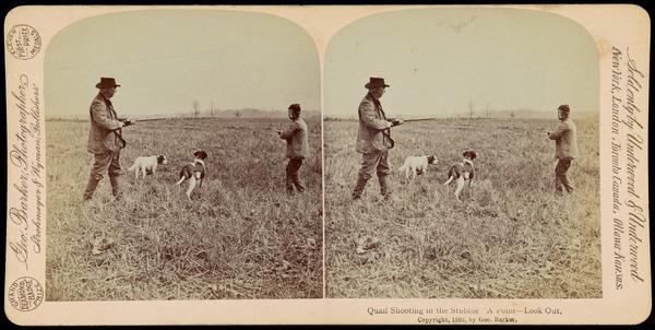 Quail Shooting in the Stubble.  A Point - Look Out (Possibly 1892)