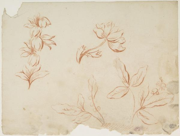 Decorative Drawing of Plants [Verso: Landscape]