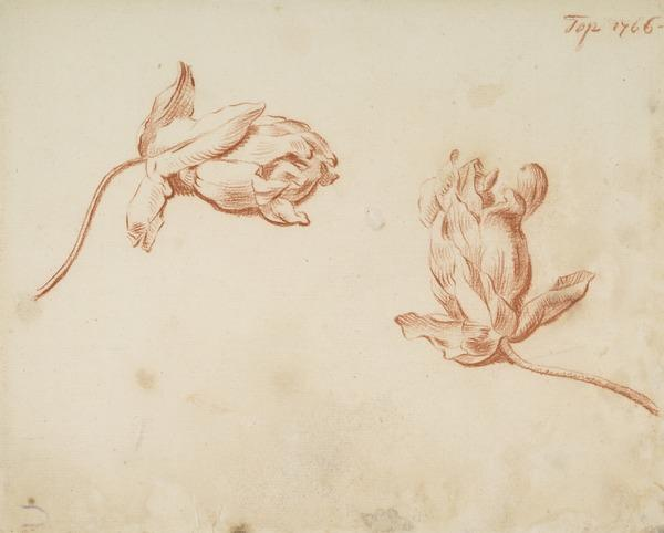Decorative Drawing of a Plant (Dated 1764)