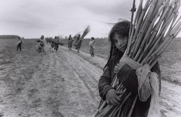 Calderari Gypsy Children Gather Canes near Sintesti, Romania (1993)