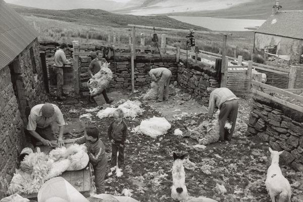 During the Clipping at Loch A'Bhraoin, Wester Ross (1988)