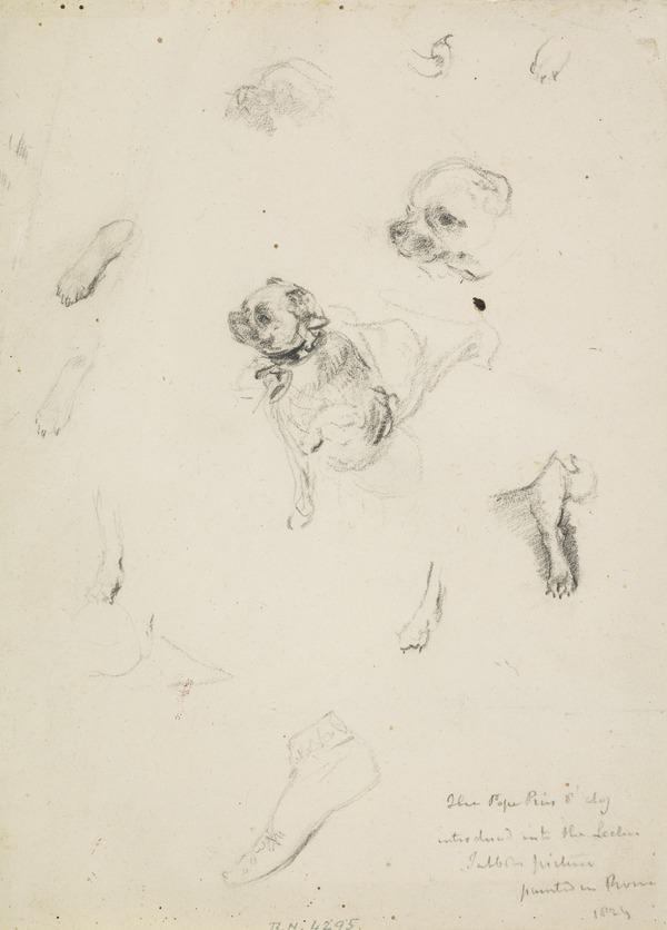 Studies of a Small Dog