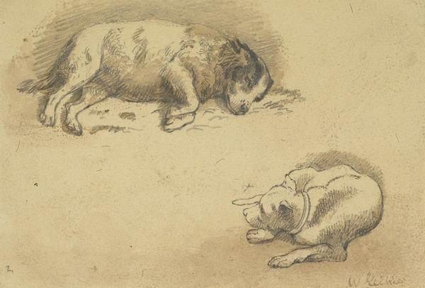 Two Studies of Sleeping Dogs