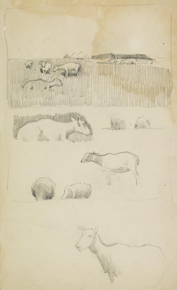 Sketches of Sheep at Cockburnspath [Verso: Further Sketches of Sheep]