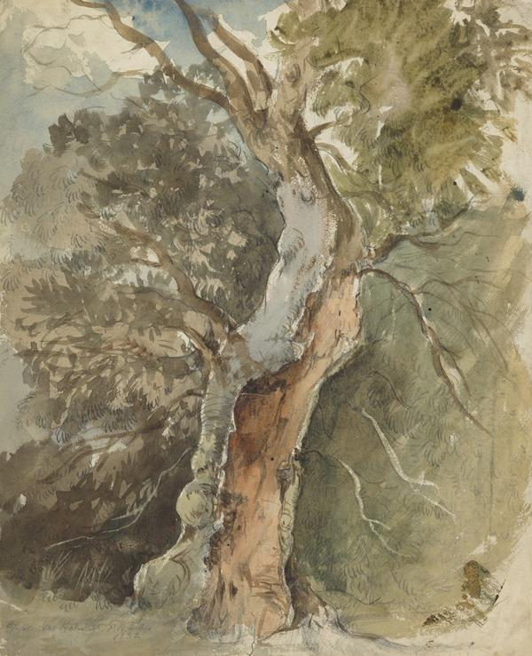 A Tree (Dated 1832)