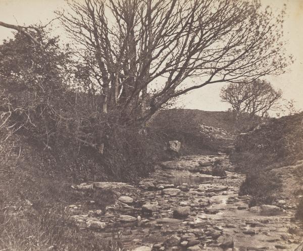 Trees and stream near Helensburgh ?