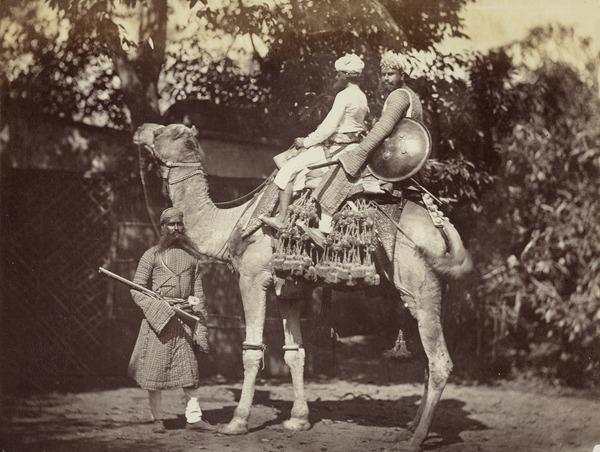 'Riding Camel with trappings. The figure on foot is a Rajpoot Thakoor' (1858 - 1865)