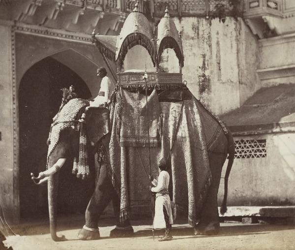 'The State Elephant of a Native Court, with a howdah, and the trappings usually worn on state occasions' (1858 - 1865)