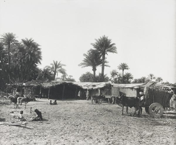 Farm, Sindh (About 1890)