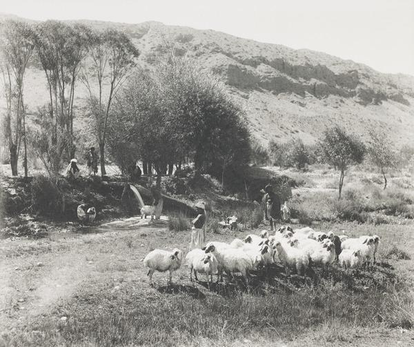 Pastoral Scene, Baluchistan (About 1900)