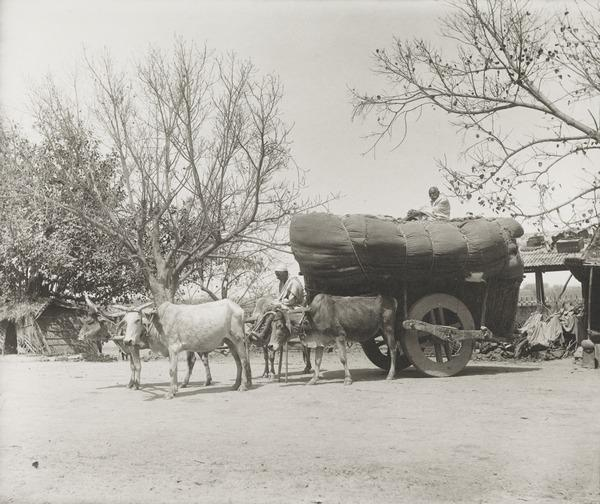 Bullock Cart, Sind (About 1890)