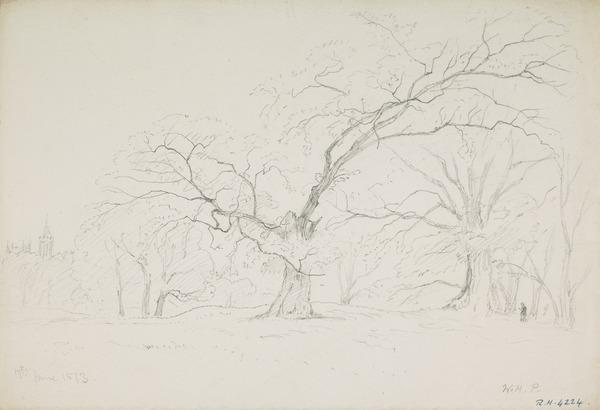 A Wood with Ancient Trees (Dated June 17, 1873)