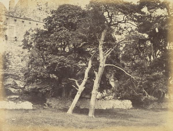 Trees at Craigmillar (About 1860)