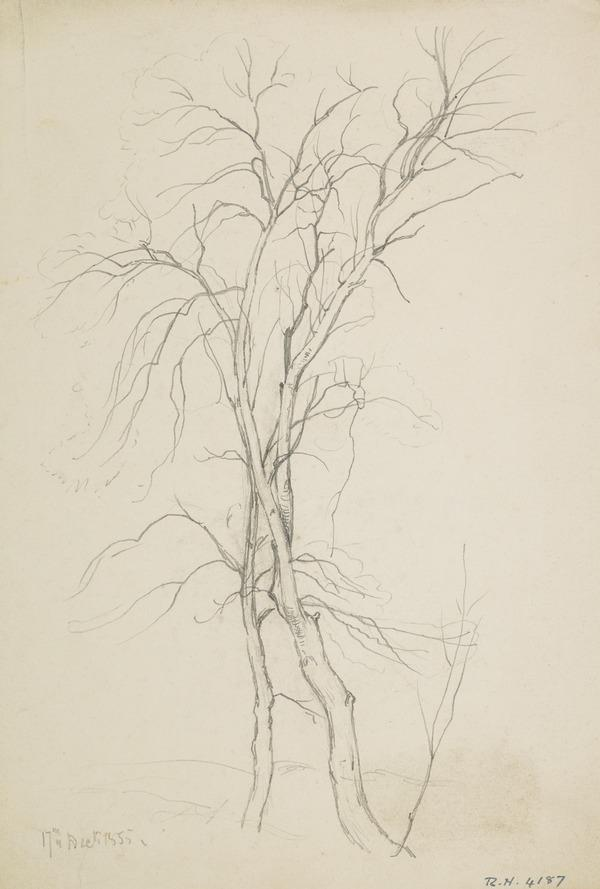 Two Trees (Dated December 17, 1855)
