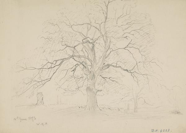 An Oak Tree (Dated June 18, 1873)