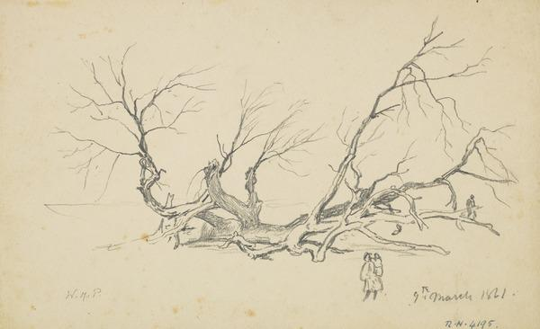 A Fallen Tree (Dated March 9, 1861)
