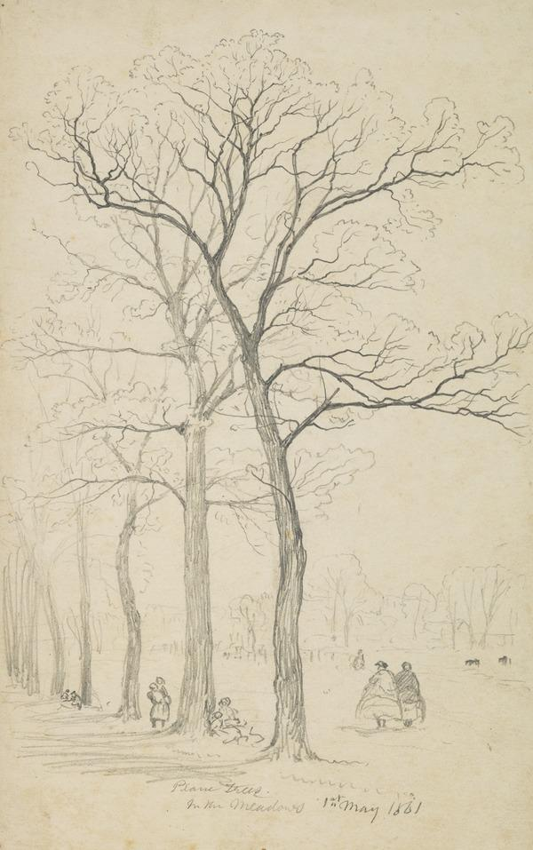 Plane Trees in the Meadows, Edinburgh (Dated 1861)