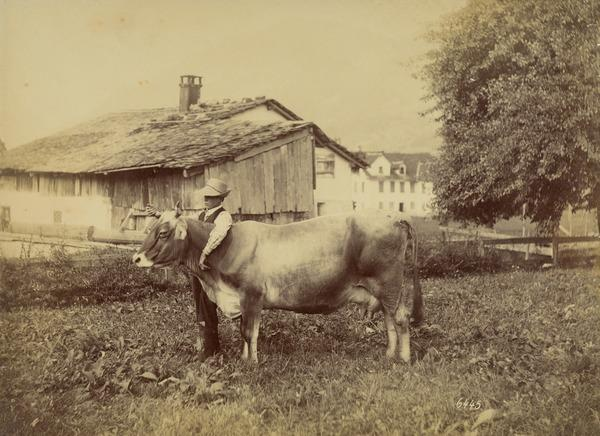 Boy with Cow (1880s)