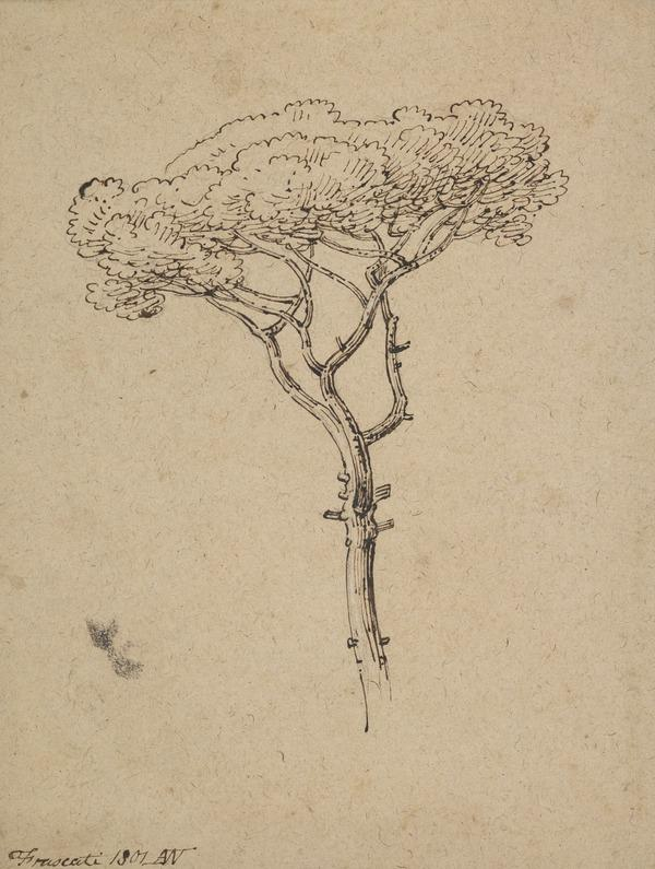 Study of a Tree (Dated 1801)
