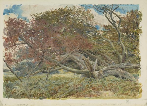 A Fallen Beech Tree (1880)