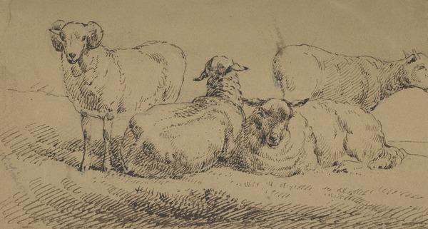 Study of four sheep
